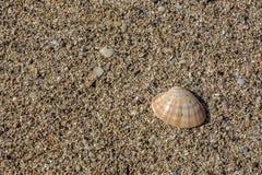 Shell on small pebbles Stock Photos