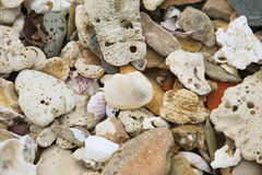 Shell and small stones at the sea shore at Sam Roi Yot National park, Thailand. Stock Photo