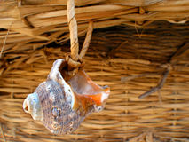 Shell snail Stock Photo