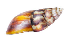 Shell of snail Stock Photos