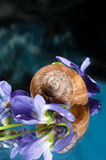 Shell of a snail. With purple flowers around it stock photos