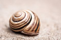 Shell of a snail Royalty Free Stock Photos