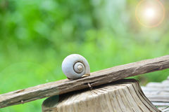 Shell snail Royalty Free Stock Image