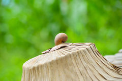 Shell snail Stock Photo