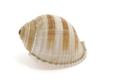 Shell of a snail on white background. Spiral Royalty Free Stock Photos