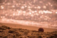shell snoepje van de strand bokeh het volledige kleur Stock Afbeelding
