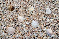Shell sobre partes pequenas de escudos em uma praia tropical fotografia de stock royalty free