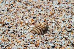 Shell sobre partes pequenas de escudos em uma praia tropical fotos de stock