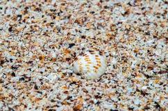 Shell sobre partes pequenas de escudos em uma praia tropical fotografia de stock