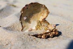 Shell spécial image libre de droits