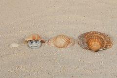 Shell-spel Royalty-vrije Stock Foto's
