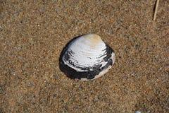 Shell-spel Stock Fotografie