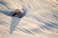 Shell in spiaggia insabbia Immagine Stock