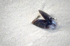 Shell in spiaggia insabbia fotografia stock