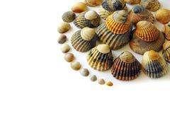 Shell Spiraal royalty-vrije stock foto