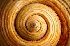 Shell Spiral Fotos de archivo libres de regalías