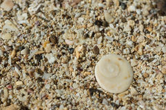Shell with a spiral curl on sand Royalty Free Stock Photography