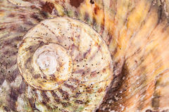 Shell Spiral Royalty Free Stock Images