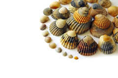 Shell-Spirale lizenzfreies stockfoto