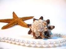 Shell, star, pearls. Sealife from South China, 2005 Royalty Free Stock Image