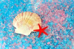 Shell and star on sea salt Stock Photography