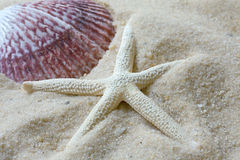 Shell and Starfish on beach Royalty Free Stock Photo