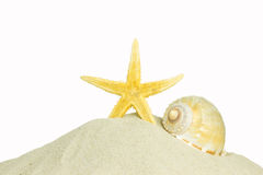 Shell and starfish Royalty Free Stock Images