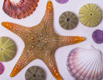 Shell and starfish frame Royalty Free Stock Image