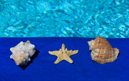 Shell and starfish near the water Royalty Free Stock Photography
