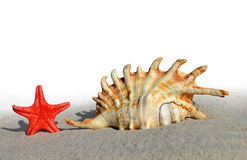 Shell with starfish Royalty Free Stock Photos