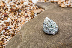 Shell on stone Stock Photography