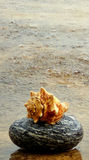 Shell and stone. I brought this stone from the sides of River Mandakini in Uttrakhand,India stock images