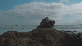 Shell on a stone by the sea against the background of waves and blue sky. 4k. 4k video. slow motion. 23.98 fps.  stock video footage