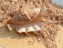 Shell on the stoun royalty free stock photo