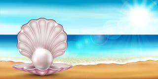 Shell strand Royaltyfria Foton
