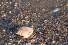 Shell strand Royaltyfria Bilder