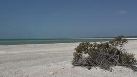 Shell-strand in het Nationale Park van de Haaibaai, Westelijk Australië stock video