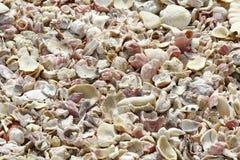 Shell strand i Oman Royaltyfria Bilder