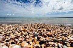 Shell strand Nya Zeeland Royaltyfria Bilder
