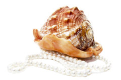 Shell and a string of pearls Stock Images