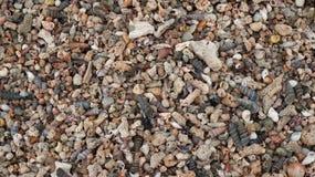 Shell struttura il fondo dei molluschi dei coralli Fotografie Stock