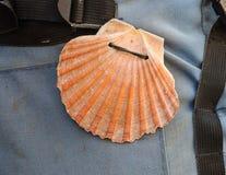 Shell su un backpak Fotografia Stock