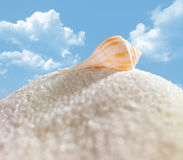Shell on sugar mountain Stock Photos