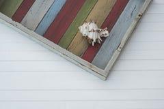 Shell sulla plancia colorata Immagine Stock Libera da Diritti
