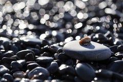 Shell sulla roccia Fotografia Stock