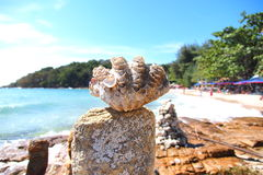 Shell sulla roccia Immagini Stock