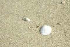Shell sulla sabbia Immagine Stock Libera da Diritti