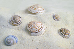 Shell sulla sabbia Fotografia Stock