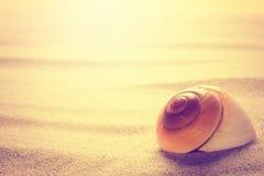 Shell sulla sabbia Immagini Stock Libere da Diritti