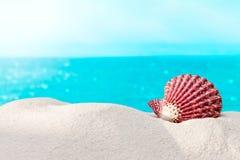 Shell sulla spiaggia Immagini Stock Libere da Diritti